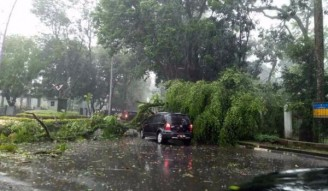 Pohon di Kota Bandung Rawan Tumbang